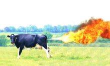 cowfartflame