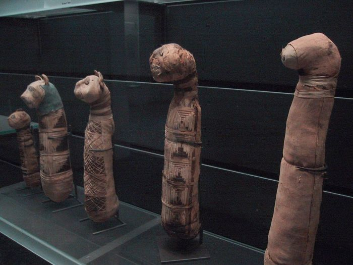 Cat_mummies_at_the_Louvre_museum