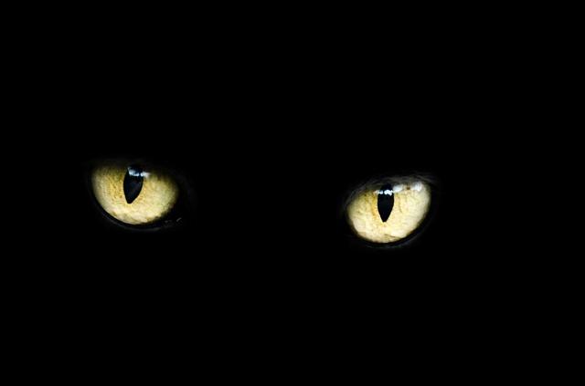 gato negro ojos