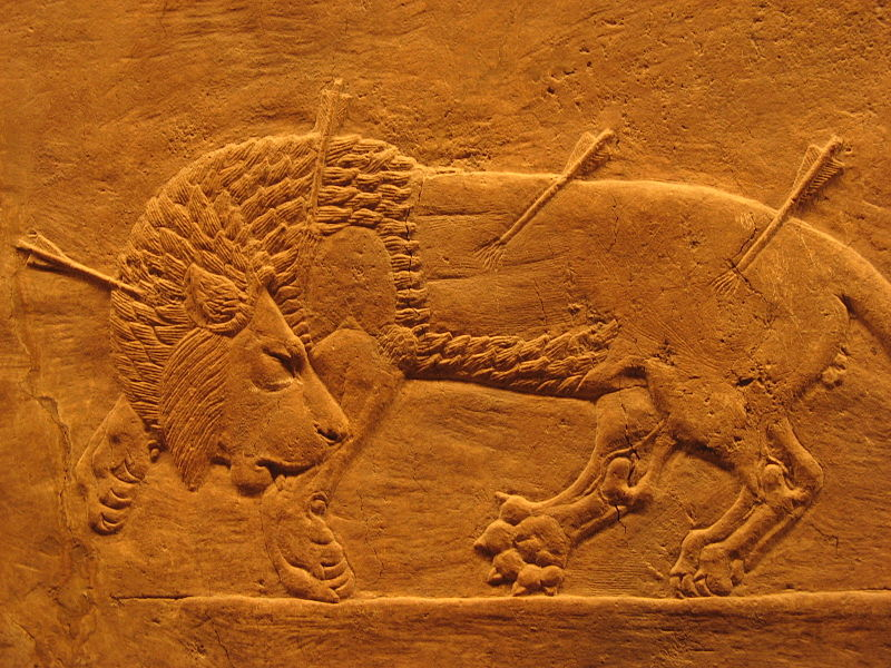 León herido, relieve del palacio de Nínive.