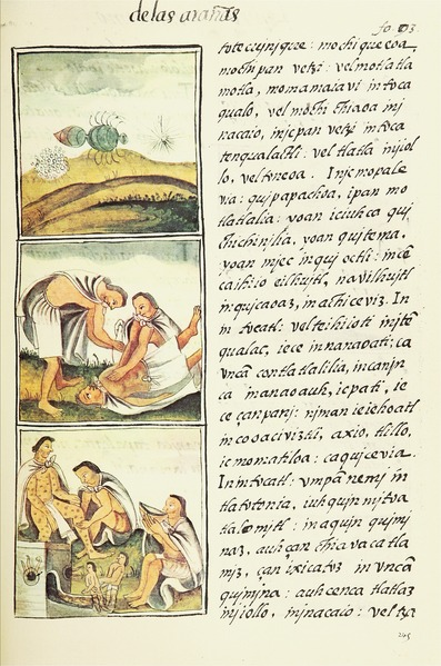 lossy-page1-397px-The_Florentine_Codex-_Insects_and_Inflammations.tif