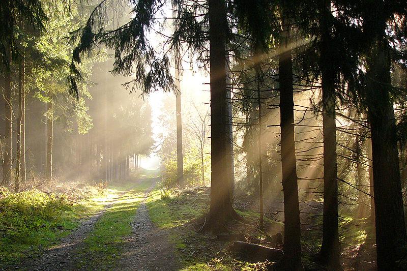 Bosque de Teutoburgo, Alemania